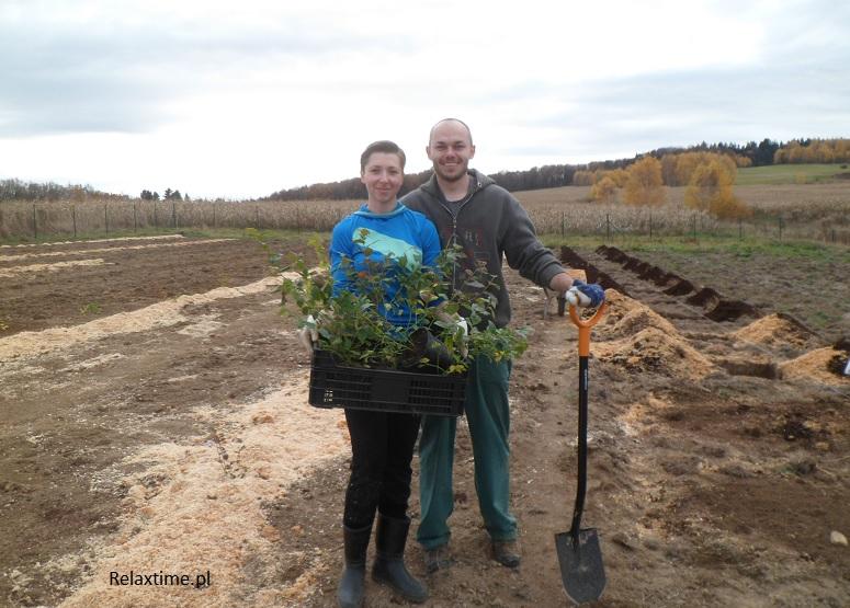 Przygotowanie i sadzenie sadzonek