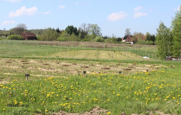 Pole z malinami i nasz mały sad w tle - późna wiosna