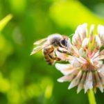 Historia pewnej pszczoły – droga do celu